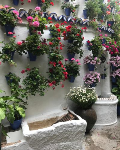 visita-guiada-patios-de-cordoba-postrera